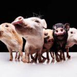 Шоу с животными на детский праздник