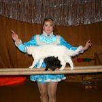 Шоу кошек на детский праздник