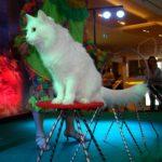 Шоу кошек в Москве