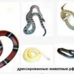 Змеи до 1,7м