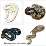 Змеи средних размеров (1,7-2 метра)
