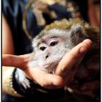 заказать дрессированную обезьянку