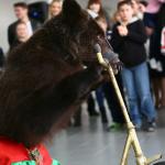 заказать дрессированного медведя на праздник