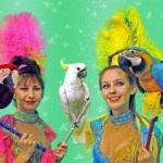 Шоу гигантских попугаев