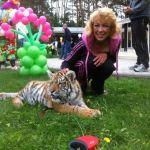 Тигр на фотосъемку