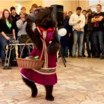 дрессированный медведь на масленицу, заказать дрессированного медведя на масленицу, дрессированный медведь видео