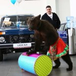 Живой медведь на мероприятие