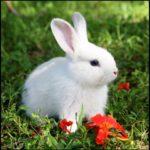Выездной контактный зоопарк. Кролик