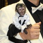 Аренда живой обезьянки на раус