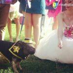 Мини пиги на свадьбу