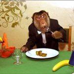 Живая обезьяна на фотосессию