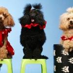 Аренда собак для фотосессии
